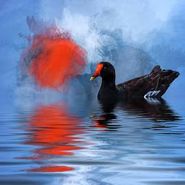 Cyndy Doty - Duck in a Pond