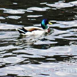 Sarah Loft - Duck in the Water