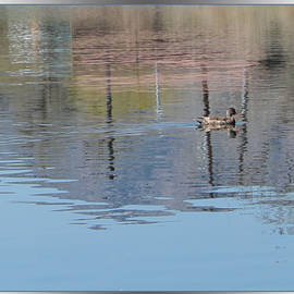 Gretchen Wrede - Duck Reflection on Shimmering Waters