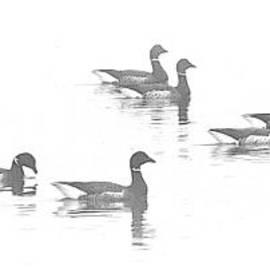 Barbara Henry - Duck Sketch