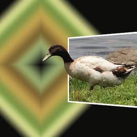 Ericamaxine Price - Duck Walk
