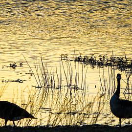 Liang Li - Ducks