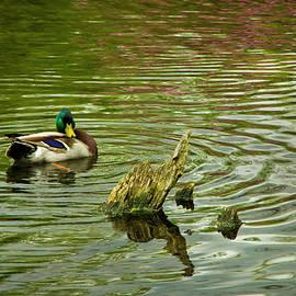 Steven Clark - Ducks Life