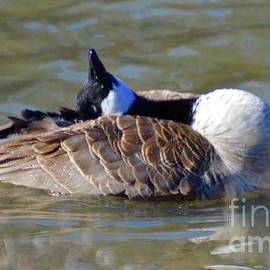 Gayle Deel - Ducky Afternoon 1