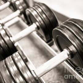 Dumbbell Weights on a Rack - Paul Velgos