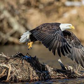 Mike Centioli - Eagle Flight