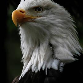 Athena Mckinzie - Eagle In All Its Glory