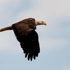 Jim Finch - Eagle in Flight