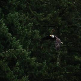 Jordan Blackstone - Eagle In His Flight - Birds of Prey Art