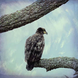 Marilyn Wilson - Juvenile Bald Eagle
