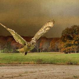 Robert Murray - Eagle Owl Hunting by Moonlight