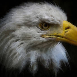 Ernie Echols - Eagle Profile Right