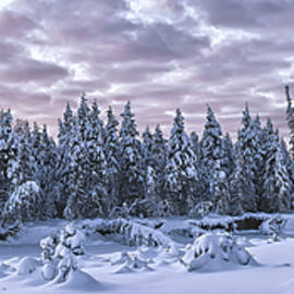 Eagle River Treeline - Ed Boudreau