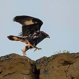 Loree Johnson - Eagle Rock Hopping