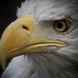 Ernie Echols - Eagle Stare 4