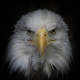 Ernie Echols - Eagle Stare
