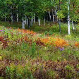 Bill Wakeley - Early Autumn Colors