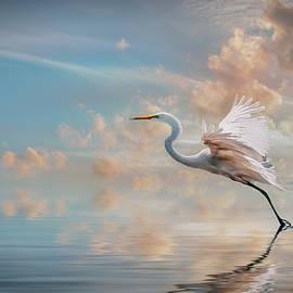 Brian Tarr - Early morning Egret