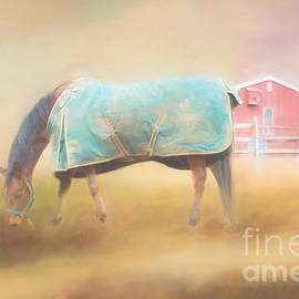 Kathleen Rinker - Early Morning On The Farm