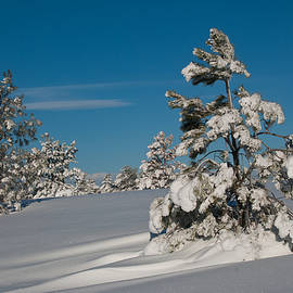 Cascade Colors - Early Morning Snowy Scene
