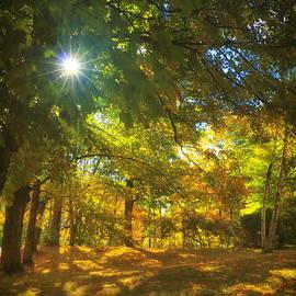Elizabeth Dow - Early October Autumn