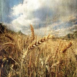 Vittorio Chiampan - Ears of corn