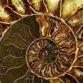 Jaroslaw Blaminsky - Earth treasures - brown and yellow ammonite