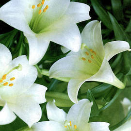 Ruth Housley - Easter Lilies