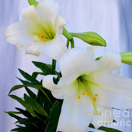To-Tam Gerwe - Easter Lillies