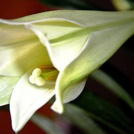 Karen  Majkrzak - Easter Lily Still Life