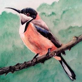 Anne Gardner - Eastern spinebill