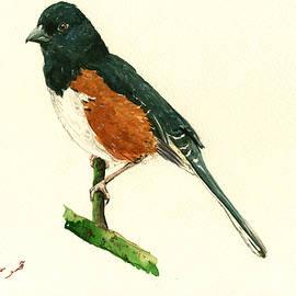 Eastern Towhee bird - Juan  Bosco