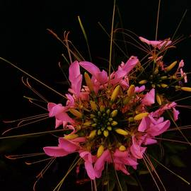 Sharon Ackley - Ecstatic Floral Explosion 2