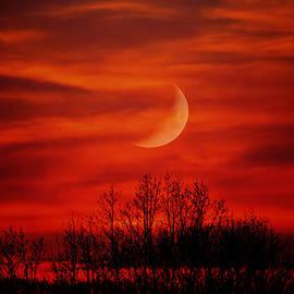 Daphne Sampson - Eerie Night Sky