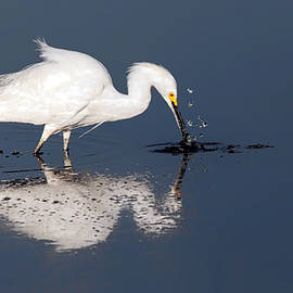 Floyd Hopper - Egret Feeding