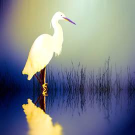 Sharon Lisa Clarke - Egret in Amethys