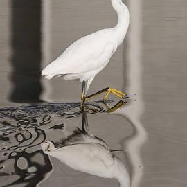 Bruce Frye - Egret Reflected