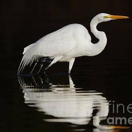 Ruth Jolly - Egrets Always