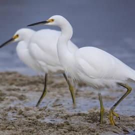 Bruce Frye - Egrets Feeding in Sea-Foam