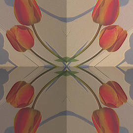 Tina M Wenger - Eight Tulips And Shadows