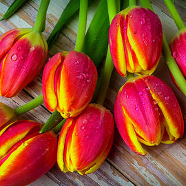 Eight Tulips - Garry Gay