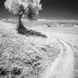 Alexander Kunz - Elderberry and Trail