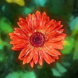 John Haldane - Electric Orange Daisy