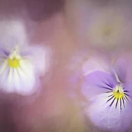 Darren Fisher - Elegance of Spring