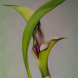 Patti Deters - Elegant Calla Buds