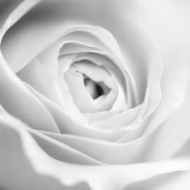 Vishwanath Bhat - Elegant Rose rendered in black and white square