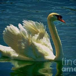Pamela Blizzard - Elegant Swan