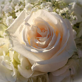 Cynthia Guinn - Elegant White Roses