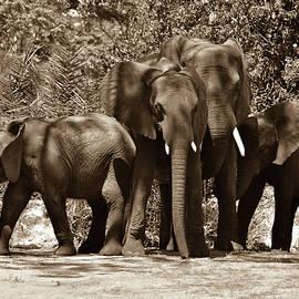 Elizabeth Abbott - Elephant Family