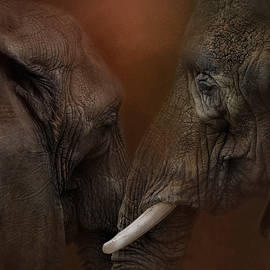 Jai Johnson - Elephant Love